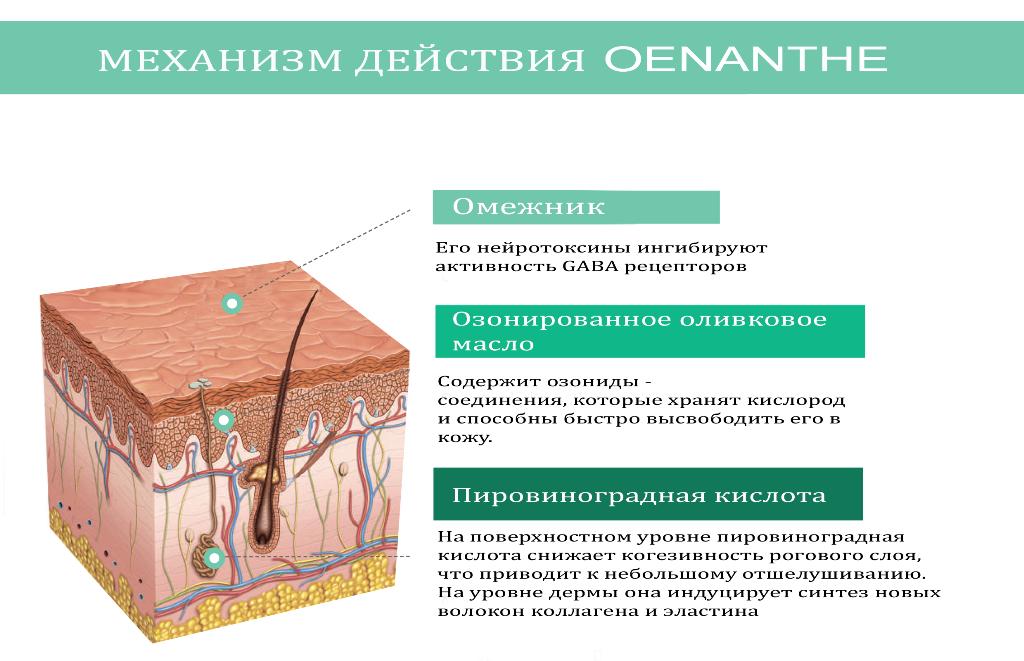 OENANTHE_СХЕМА4 сж